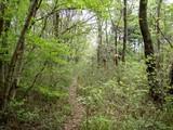 三ケ尾の森2