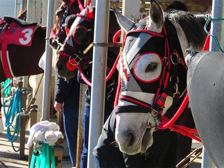 152_相馬野馬追の観客は幅広い