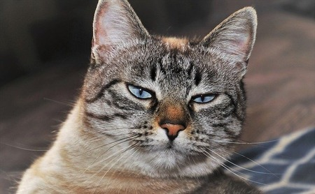 cat-3937880_640