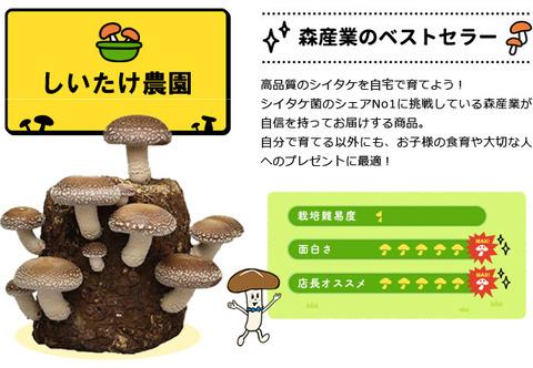 shiitake-appeal-0