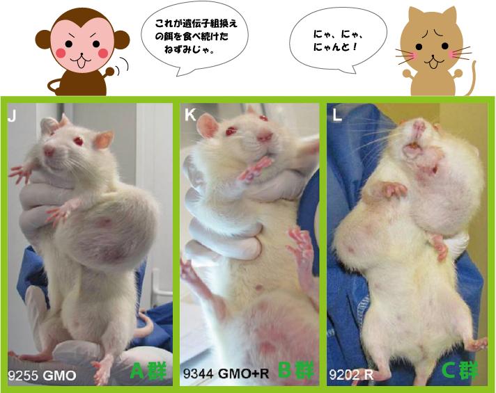 GMO 鼠 癌