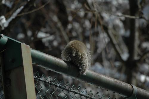 サル 猿 富山市 撮影スポット