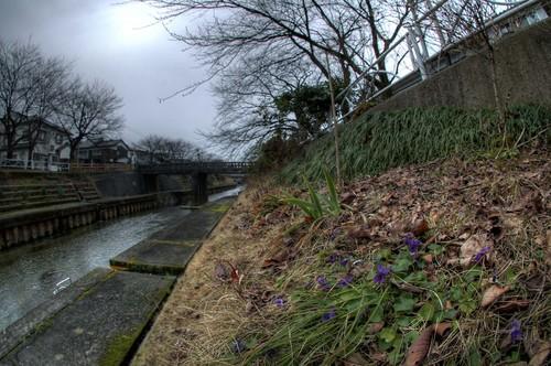2月 いたち川 富山市 植物写真