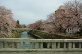 4月のいたち川