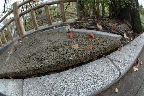 富山市 植物 いたち川