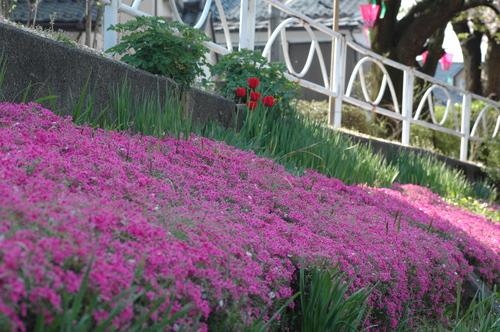 富山市 花写真 マクロ いたち川