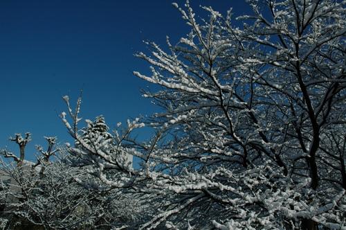 富山市 2月 積雪 いたち川