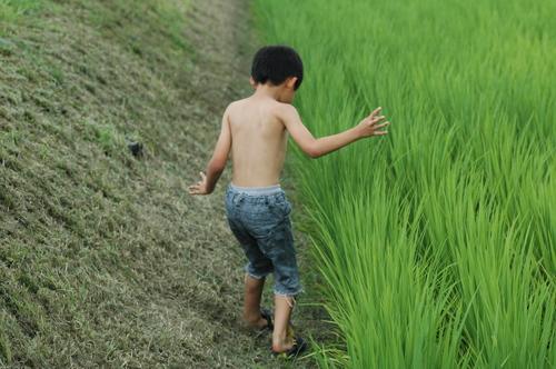 田んぼ遊び 泥遊び 育児