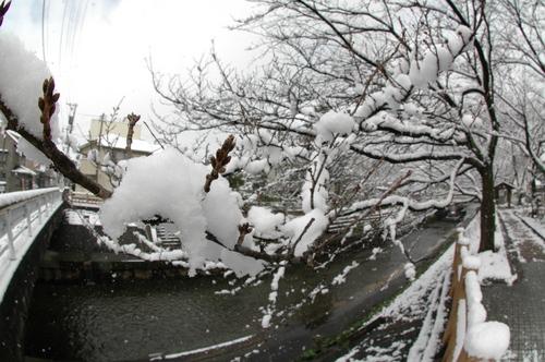 いたち川 雪