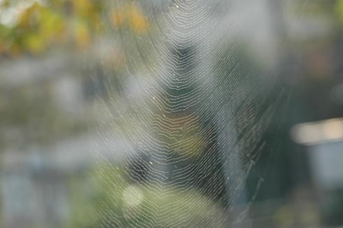 蜘蛛 富山市 いたち川 昆虫