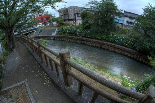 富山市 紫陽花 アジサイ いたち川