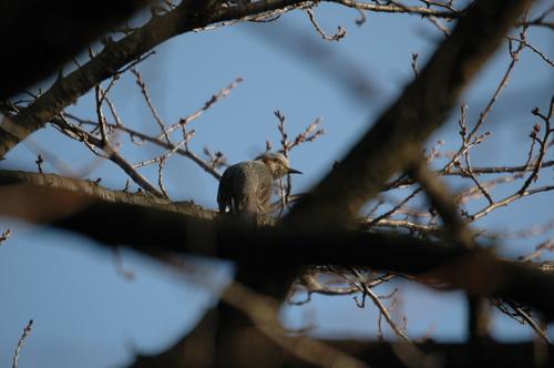 富山市 いたち川 野鳥