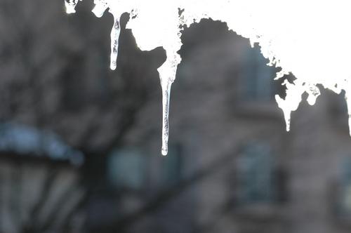 富山市 つらら 氷柱 いたち川