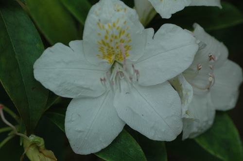 プルクラ 植物園 バンウコン タイ ランカーウィー島