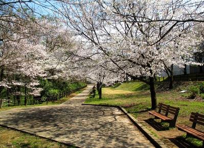 都市緑化植物園13