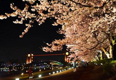 環水公園夜桜150404