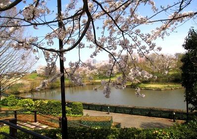 都市緑化植物園14