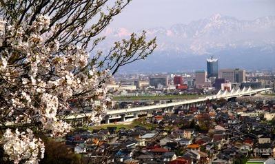 桜の見える展望台1