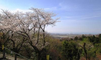 桜の見える展望台7