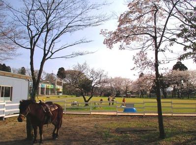 富山市ファミリーパーク10