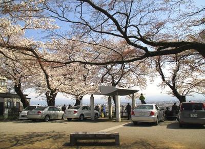 桜の見える展望台6