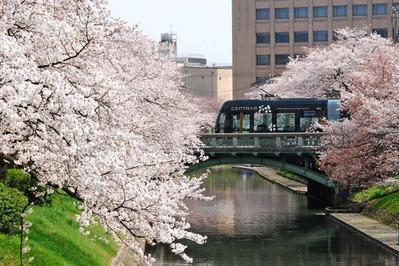 松川桜+セントラム(路面電車推進室提供 著作権・使用フリー)