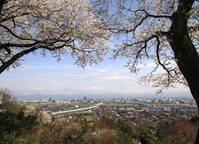 桜の見える展望台4