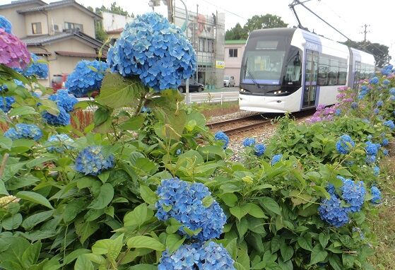 紫陽花 ~6月 水の器に青を集めて~...