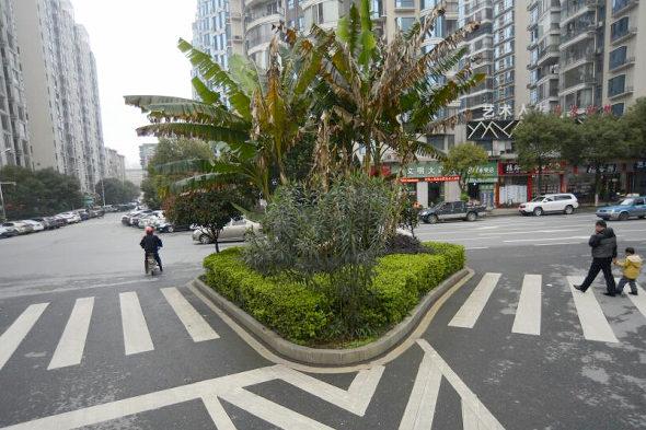 【中国】まさかの横断歩道の中を緑化!5