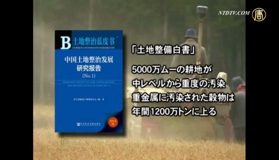 汚染 カドミウム米中国の至る所に2