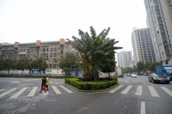 【中国】まさかの横断歩道の中を緑化!4