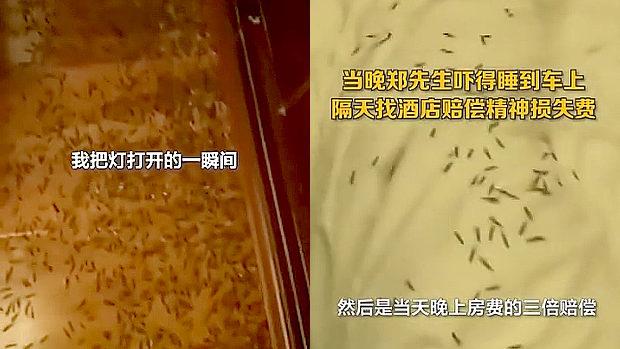 中国、ホテルで寝ていたら顔に違和感…、電気を付けたら虫が大量発生してた