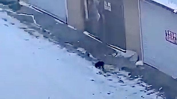 中国、武漢肺炎で隔離されて犬の散歩に行けない!そこで閃いた方法