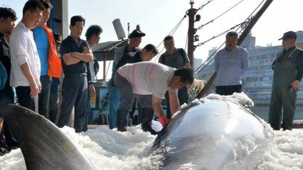【韓国】クジラ混獲「韓国1960頭:日本100頭」、たまたま日本の20倍捕れました!