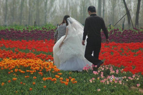 【中国】山東省 チューリップ畑、多くの観光客に踏みつけられる5
