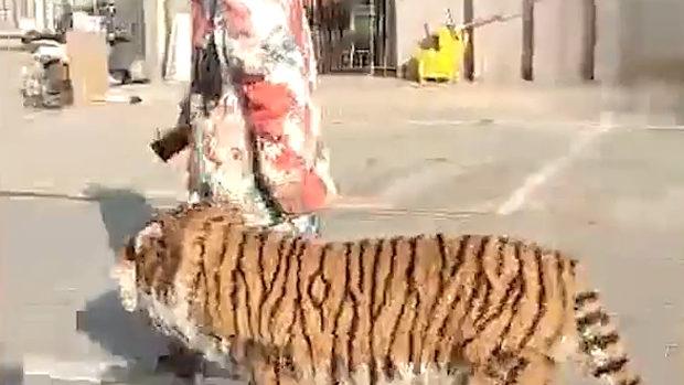 中国、街中を「トラ」を連れて散歩…!?