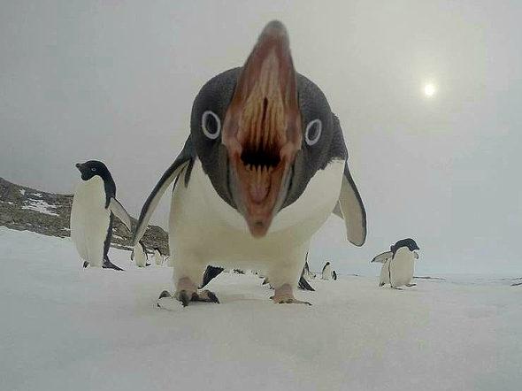 【画像】「ペンギン可愛い~」