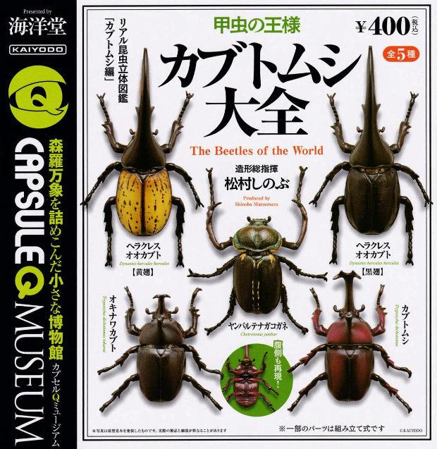 甲虫の王様カブトムシ大全 全5種-2