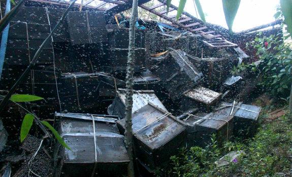 中国、蜂の巣箱運搬車が横転