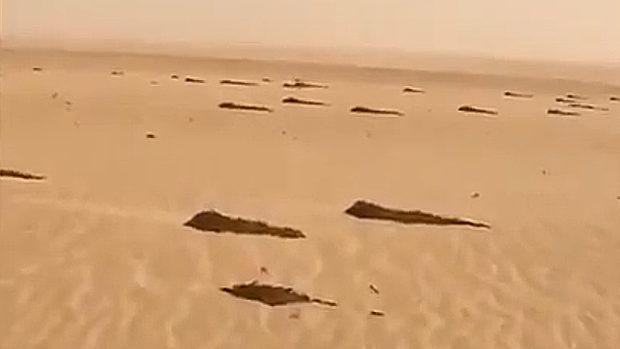 中国を目指すイナゴ軍団!イナゴはいったいどうやって砂漠を越えるのか?