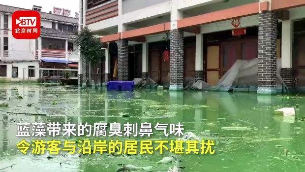 中国、洪水で冠水した街、水が引かずに今度は「藻」が爆発的に発生!