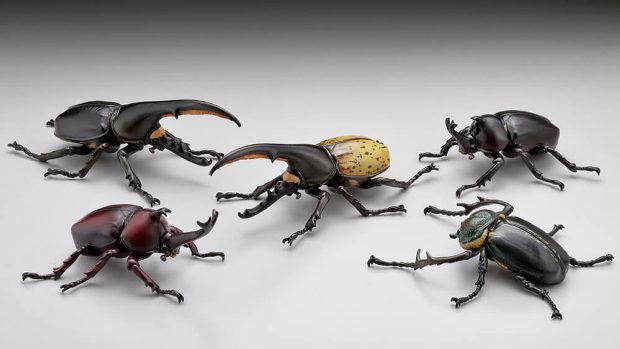甲虫の王様カブトムシ大全 全5種-1