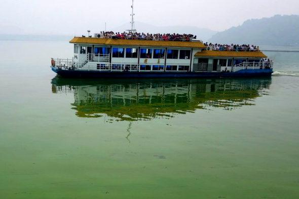 【中国】太湖に緑藻異常発生3