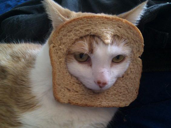 食パンに顔はめするネコ4