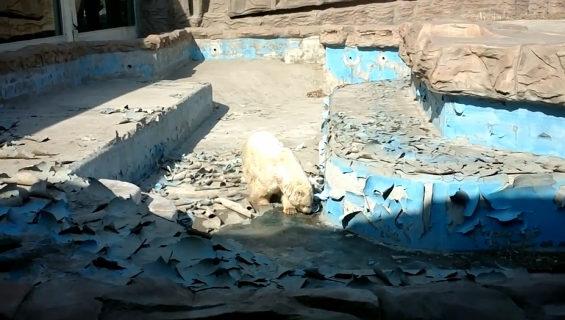 北京動物園のシロクマ 2