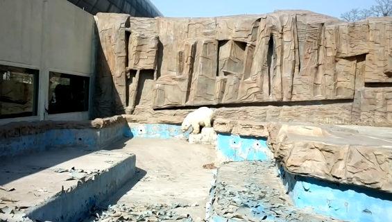 北京動物園のシロクマ 1