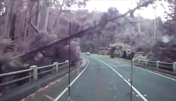 オーストラリア、林道を走行中、突然、一斉に木々が倒れ道路を塞ぐ