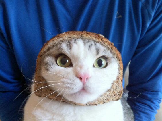 食パンに顔はめするネコ3