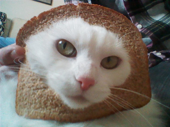 食パンに顔はめするネコ1