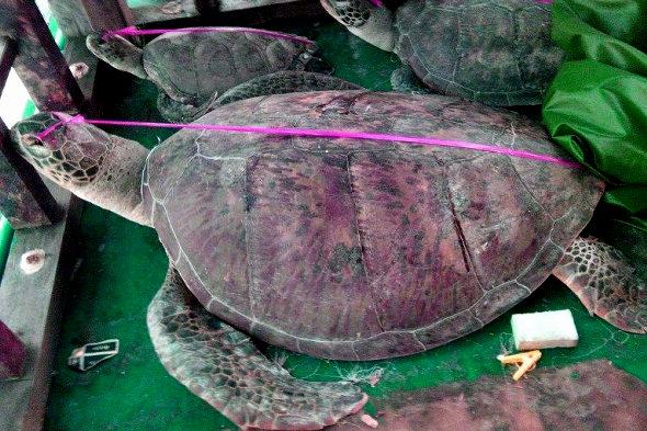 フィリピン政府、南シナ海で拿捕した中国ウミガメ密漁船の証拠写真を公開!2